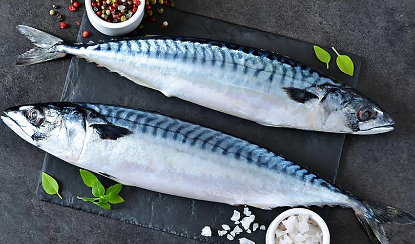 Переработка отходов рыбы